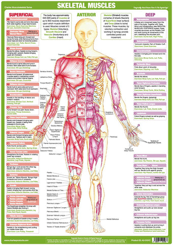 Fitness Anatomy And Health Related Posters And Wall Charts