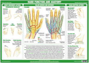 Hand Function & Anatomy Chart - Chartex Ltd