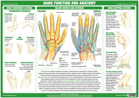 Hand Function and Anatomy Chart