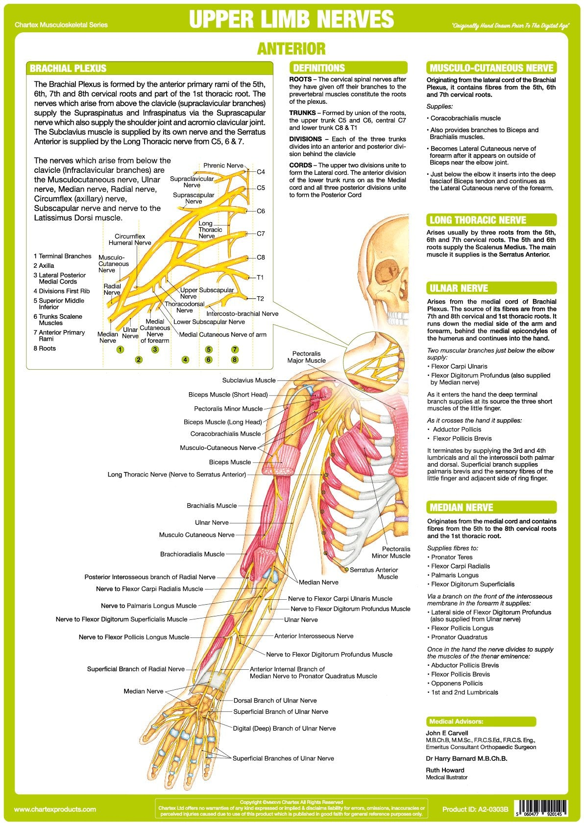 Upper Limb Nerve Chart - Anterior – Chartex Ltd