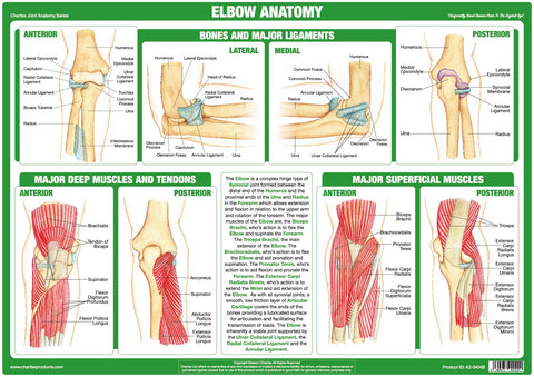 Elbow Joint Anatomy Chart