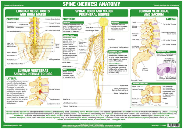 Spine (Nerves) Anatomy Chart