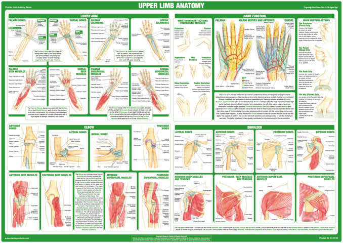 Upper Body Joint Anatomy Chart
