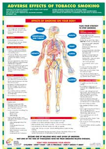 Effects of Tobacco Smoking Chart