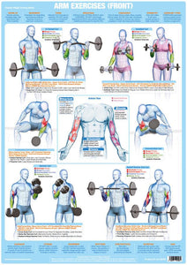 Arm Muscles Biceps Weight Training Bodybuilding Exercise Chart