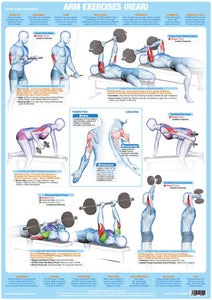 Arm Muscles Triceps Weight Training Bodybuilding Exercise Chart