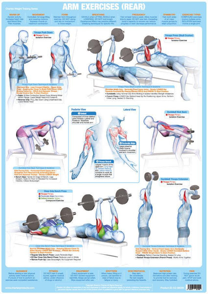 Arm Muscles (Rear) Weight Training Exercise Chart