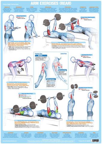 Arms Muscles (Rear) - Weight Training Chart