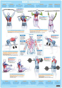 Back Muscles Weight Training Excercise Chart