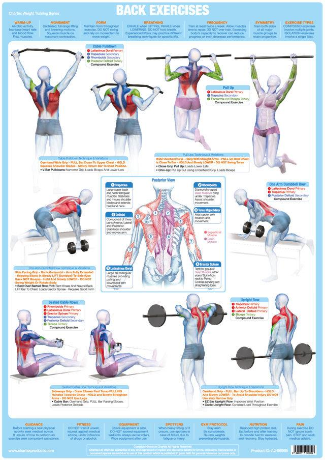 Weight Training Bodybuilding Posters Set Of 6 Chartex Ltd
