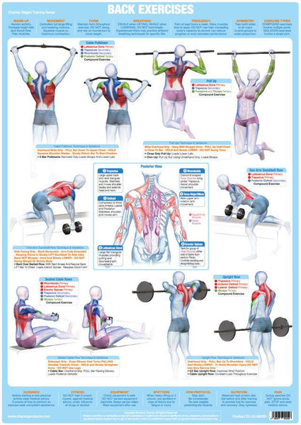 Back Muscles Weight Training Bodybuilding Exercise Chart