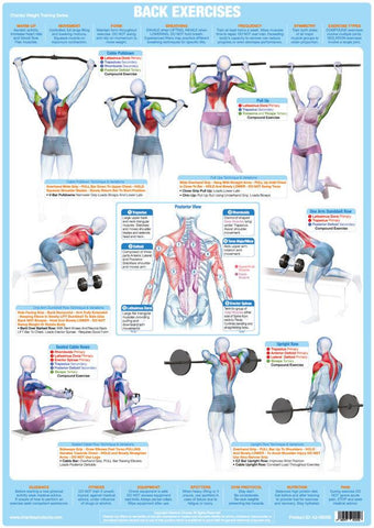 Back Muscles Exercise Weight Training Chart