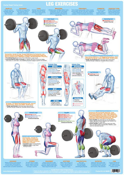 Leg Muscles Weight Training Bodybuilding Exercise Chart