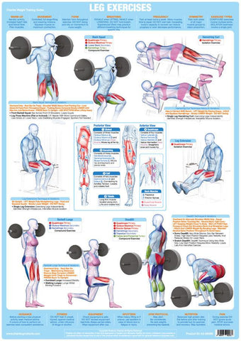 Leg Muscles Weight Training Exercise Chart