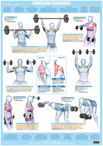 Shoulder Muscles Weight Training Exercise Chart