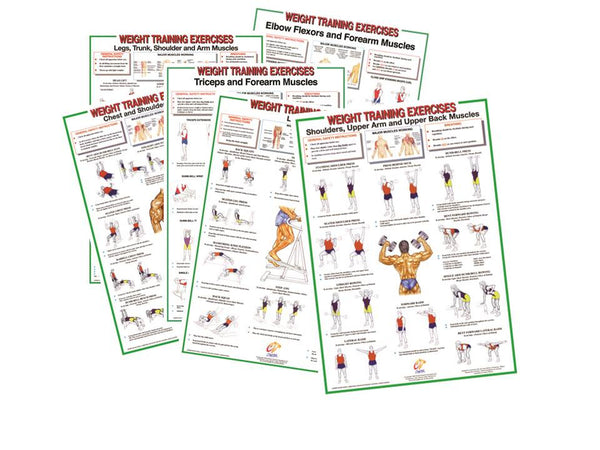 Weight Training Exercise Charts-Set of 6