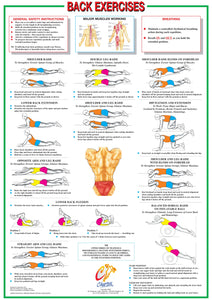 Back Muscles Floor Exercise Chart
