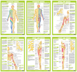 Nervous System Anatomy Charts - Set of 6