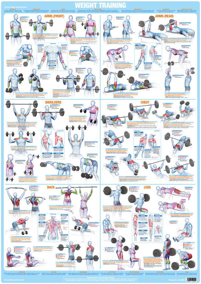 Whole Body Workout Weight Training Chart