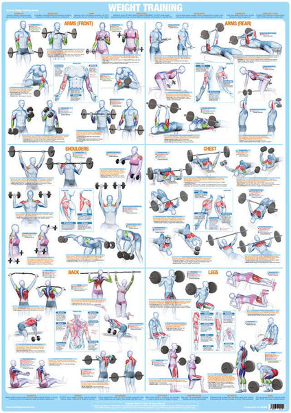 Weight Training Bodybuilding Dumbbell Barbell Exercise Chart