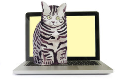 silver tabby on lap top