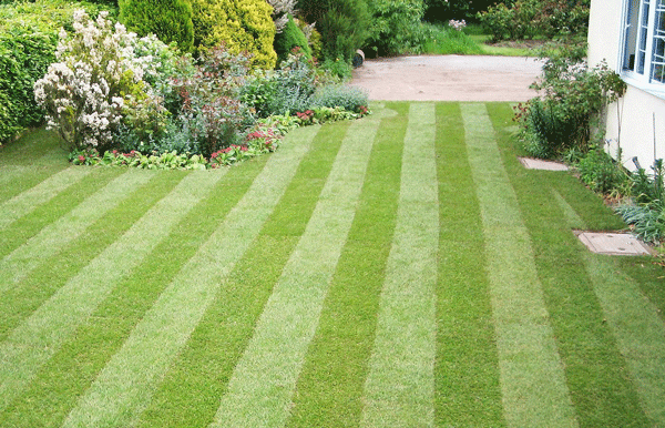 Plan Ahead For A Stunning Summer Lawn