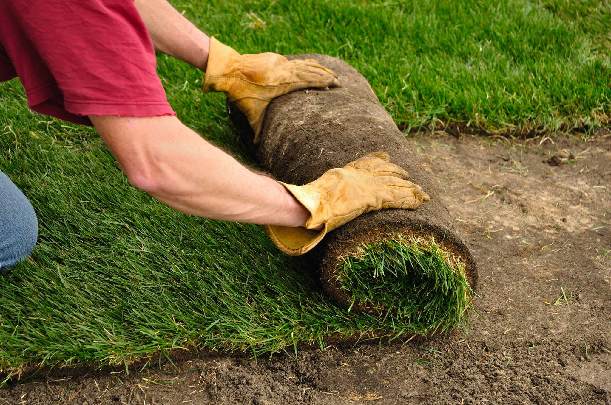Is it OK to lay turf in summer?