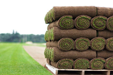 fresh turf from local turf grower
