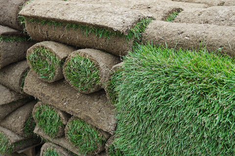 rolled turf on pallet