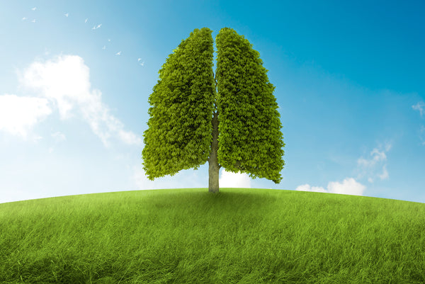 How Trees Can Help Us Breathe