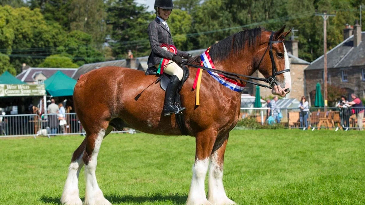 The Clydesdale Horse Society