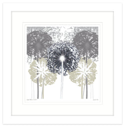 Ordered Allium Shadows Framed