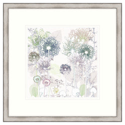 Delicate Allium Framed Print