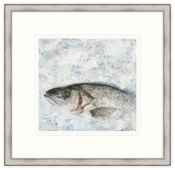 Sea Bass Framed Print