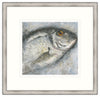 Sea Bream Framed Print