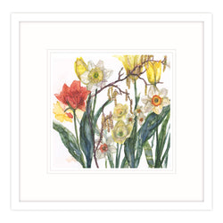 Daffodils and Catkins Framed Print