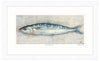 Cornish Mackerel Framed Print
