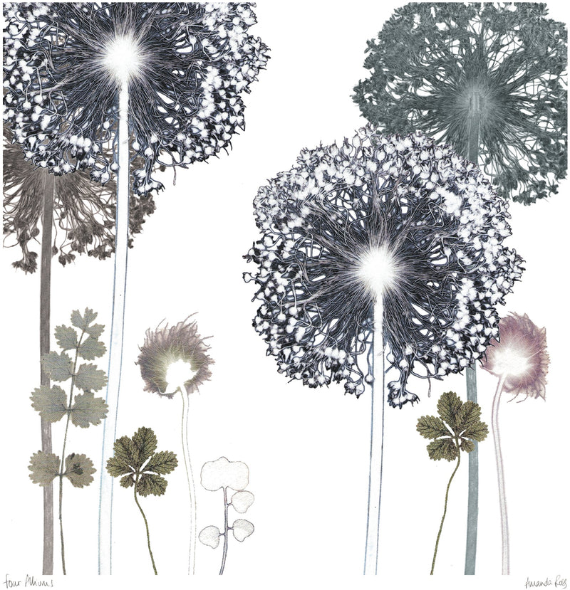 Four Alliums Print