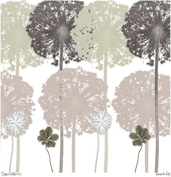 Ordered Alliums Print