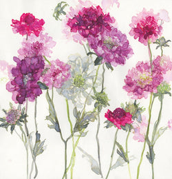 Mixed Scabious Floral Art Print
