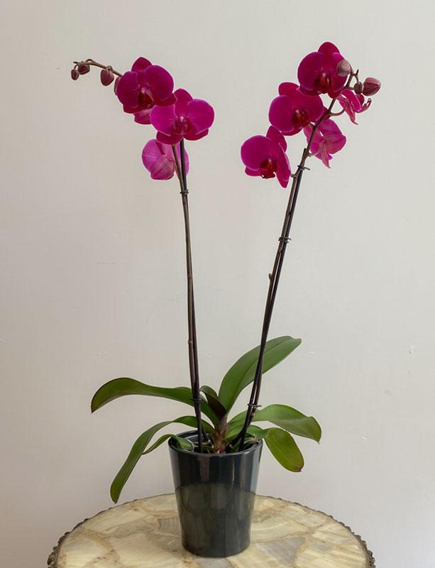 Orquidea De Doble Vara Morada Guapa Con Flores Get full control of your ad spaces, keep your site clean and safe with orquidea ad quality tool. guapa con flores