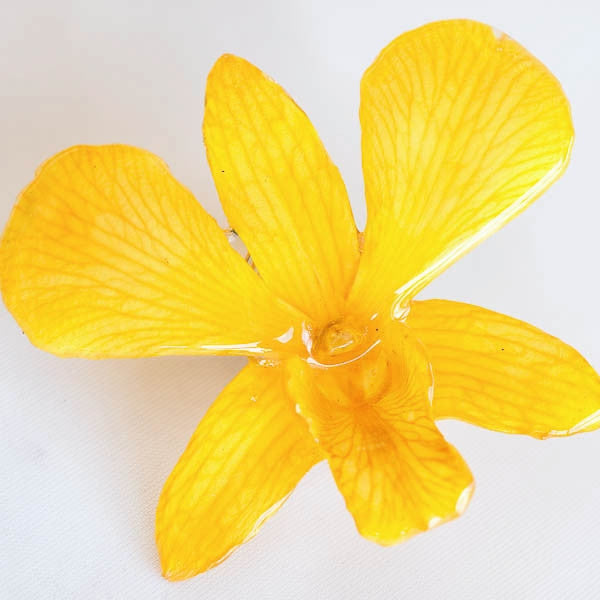 Yellow Dendrobium Orchid pin.