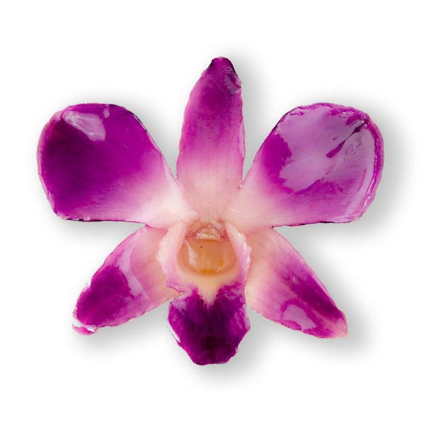 Purple White Dendrobium Orchid Hairclip.
