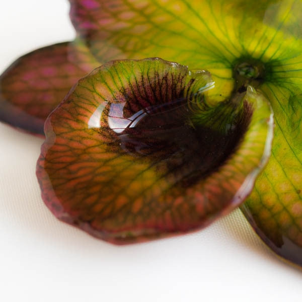 Purple Green Nobile Orchid pin.