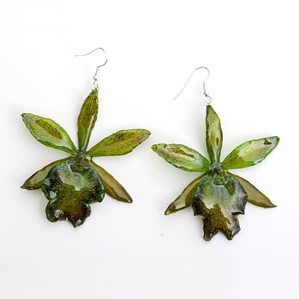 green cattleya orchid flower earrings