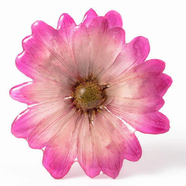 Pink-White Chrysanthemum Pin.