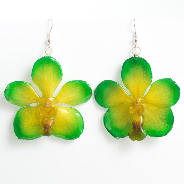 Green Yellow Vanda orchid earrings