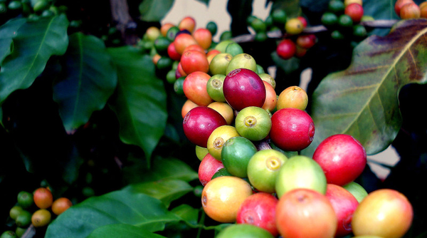 Single Origin: Central and South American