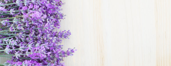 Relax with Oregon Lavender Essential Oil