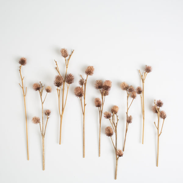 Dried Thistles